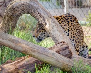 San Diego Zoo, Part 2